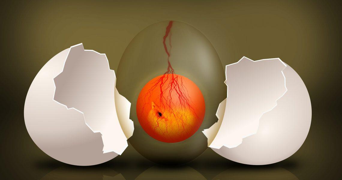 embryo-544192_1920